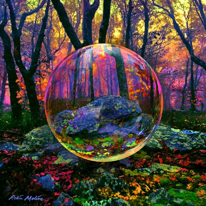 https://images.fineartamerica.com/images-medium-large-5/enchanted-forest-robin-moline.jpg