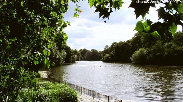 Scenery Green